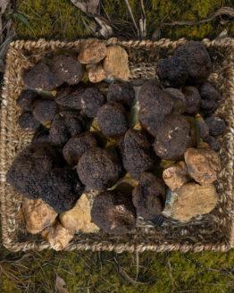 truffe-fraiche-gastronomie-italie
